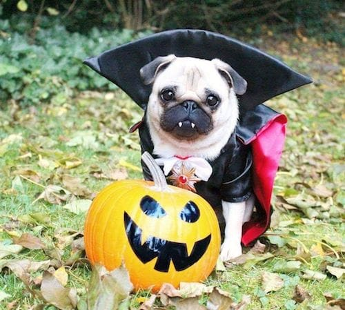 830db237 15 Spooktacular Dog Halloween Costumes: From Super-Cute to Super-Scary