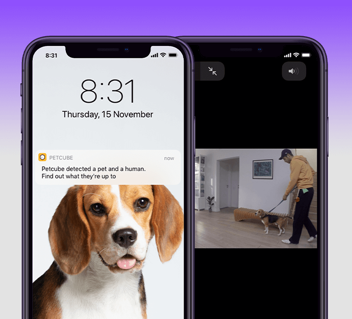 Petcube Care Smart Alerts: Pet and Person Detection