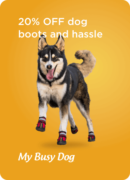 Dog wearing My Busy Dog hiking boots