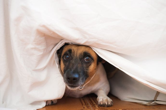 A dog hiding under the bed