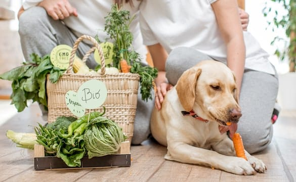 26 Vegetables Dogs Can & Can't Eat