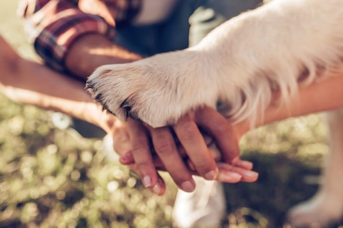 Human hands with a dog paw