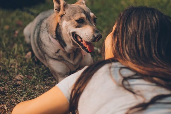 9 Free Courses and Books Pet Parents Shouldn't Miss