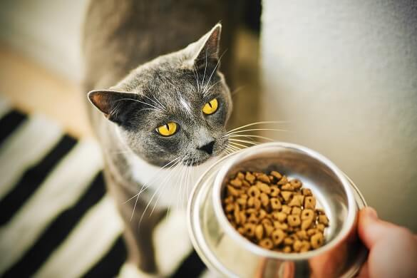 What to Do When Your Cat Is Not Eating