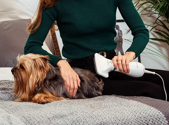 drying a dog with a hairdryer