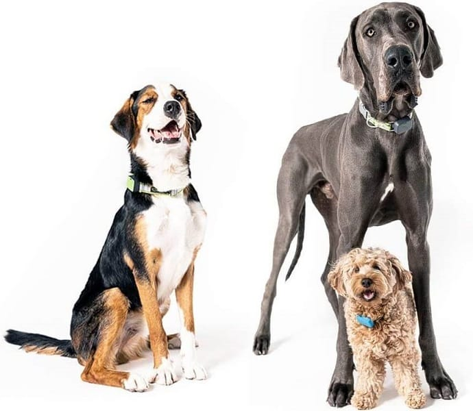 three dogs with pet trackers