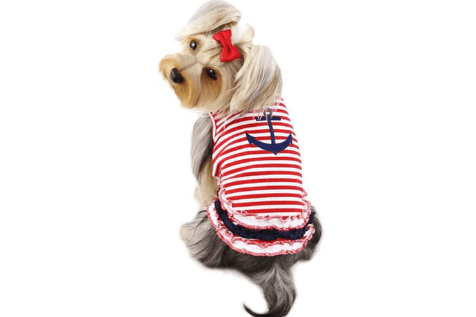 a dog wearing a red-striped doggy tank