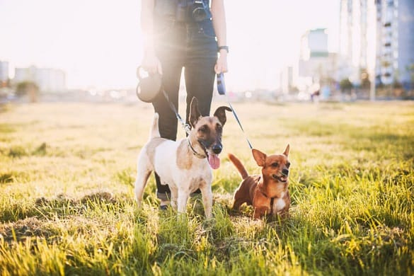 4 Health Benefits You Can Get From Walking A Dog