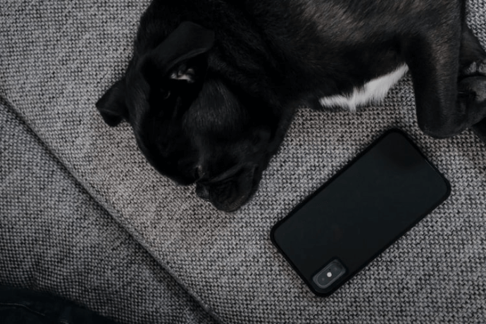 a dog with phone