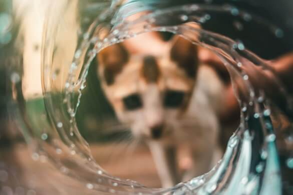 Why are Cats Afraid of Water? 4 Reasons Why Your Cat Hates it