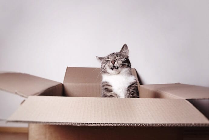 cat in a box sneezing