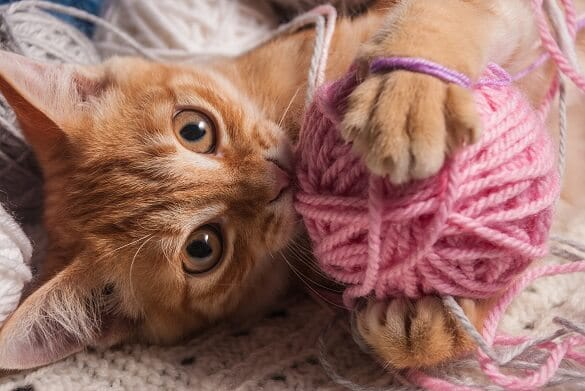 What is Pica in Cats? Definition, Reasons, Treatment