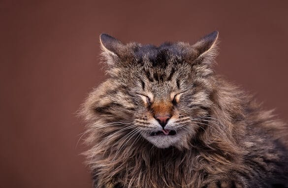 Is Cat Sneezing a Reason for Concern?