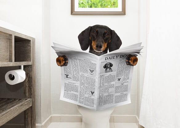 How to Potty Train a Puppy: Your Guide to Success