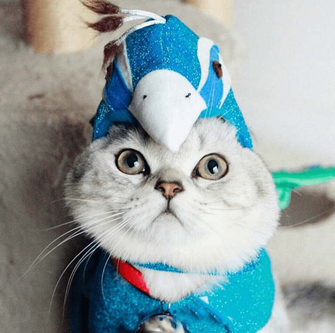 cat with feathers