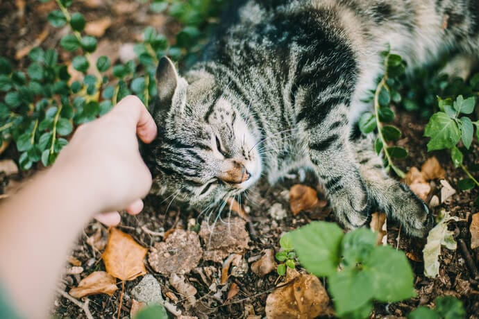 should you buy pet insurance for your cat