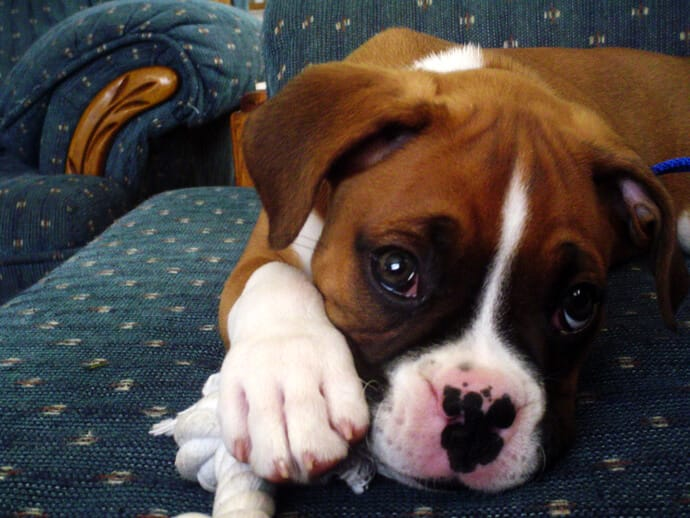 Problems that dogs and puppies may have