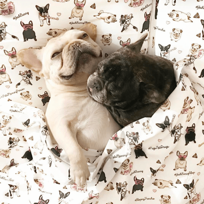 doggos in bed