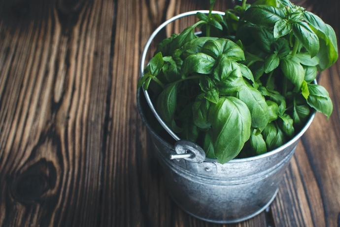 can cats eat basil