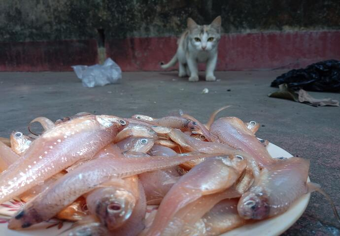 cat and raw fish