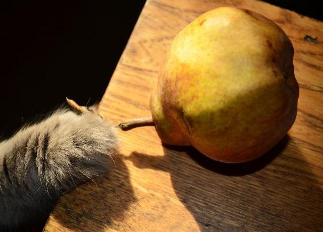 can cats eat pears