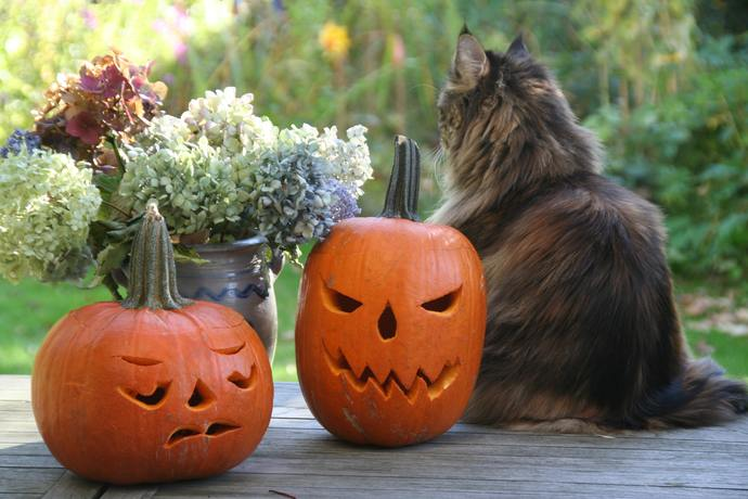 can cats eat pumpkin