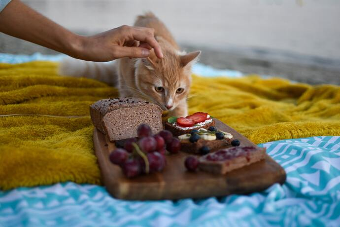 can cats have strawberries