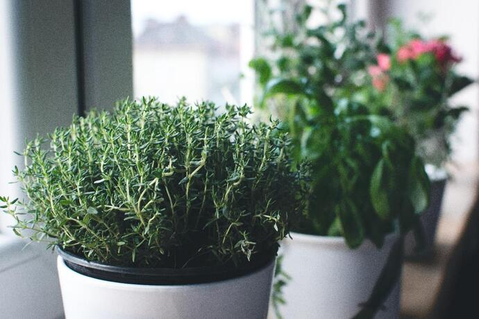 can cats eat thyme