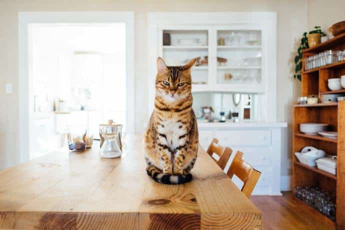how to keep your cat off the counters