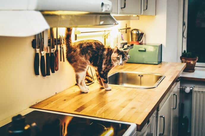 how to keep cat off counter