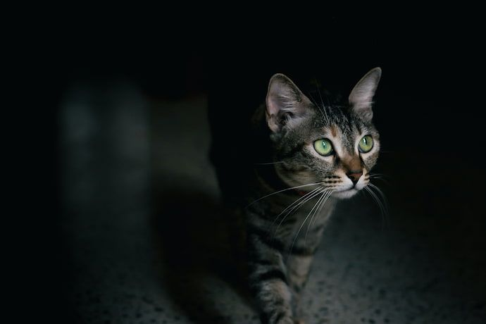 what does it mean when your cat stares at you