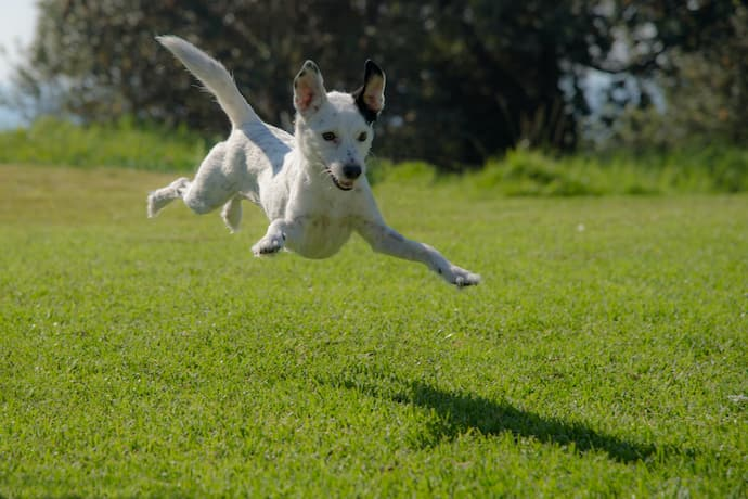 dog jumps when excited
