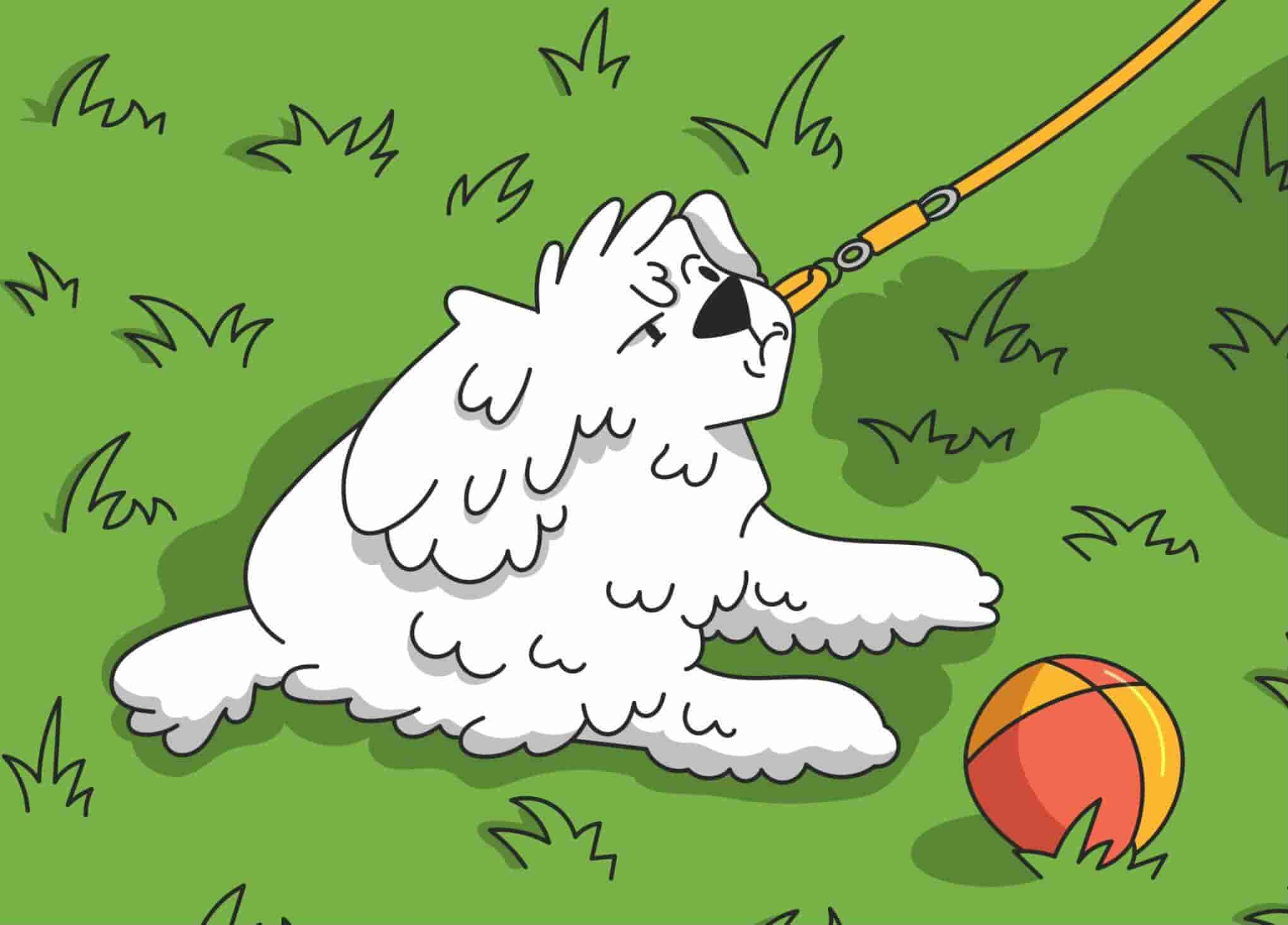 How to Leash Train a Dog or Puppy