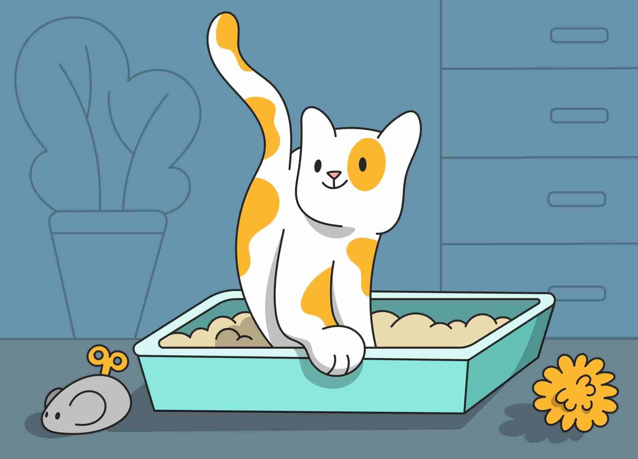 Potty Time: How to Litter Train a Kitten?