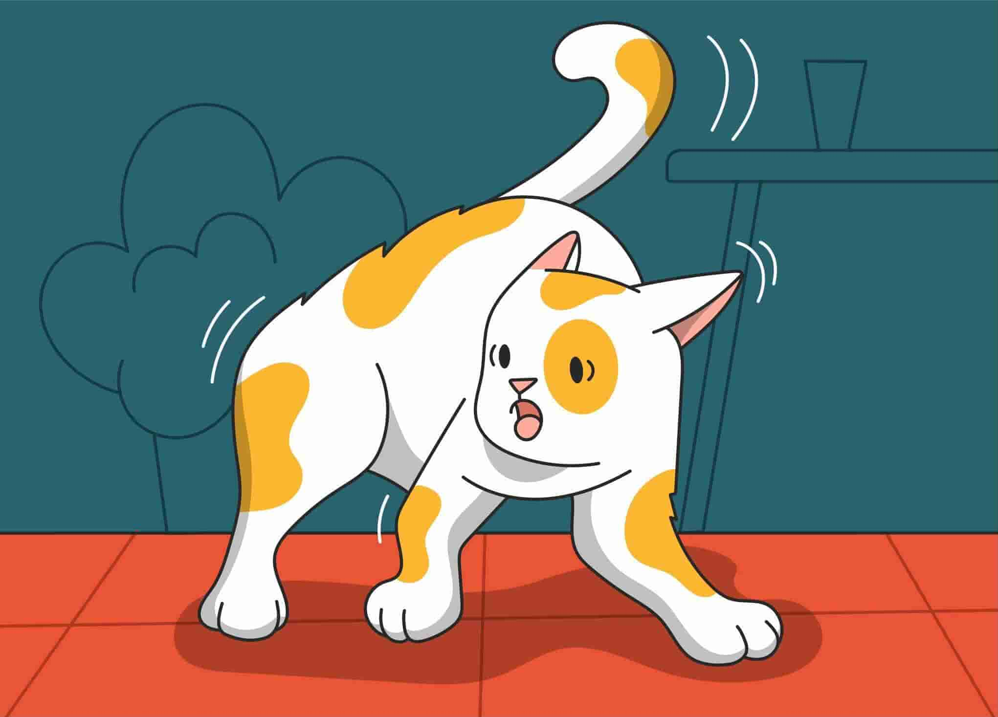 Skittish Kitty: How to Comfort a Scared Cat