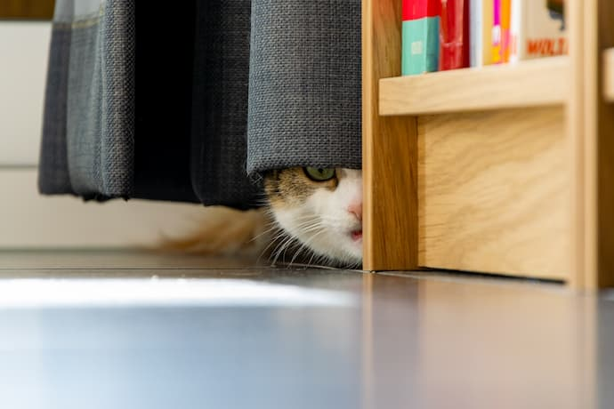 how long will a scared cat hide