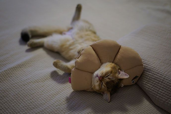 cats sleeping on their back