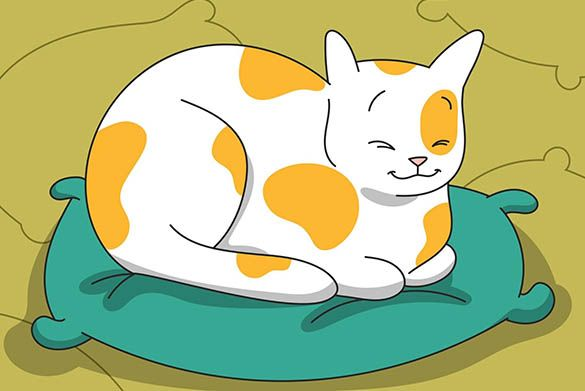 9 Most Common Cat Sleeping Positions: What Can They Tell About Your Pet?