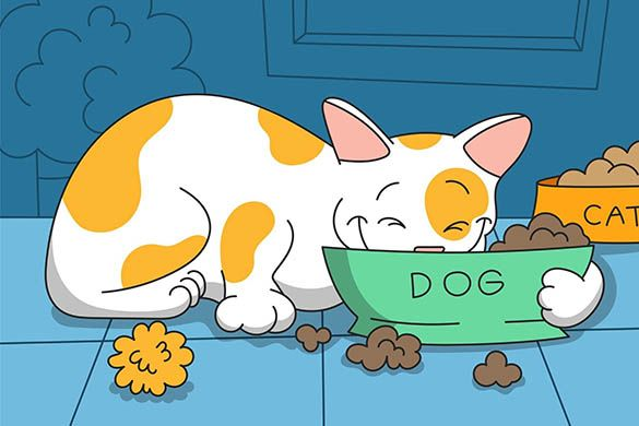 Can a Cat Eat Dog Food? Safety And Possible Side Effects